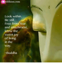 Buddha: e buddhism com  Look within.  Be still.  Free from fear  and attachment,  know the  sweet joy  of living  in the  way.  ~Buddha