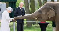 12 APR: The Queen fed an elephant a banana during a visit to Whipsnade Zoo. The monarch and the Duke of Edinburgh fed seven-year-old Donna while touring a new £2m home for nine Asian elephants at the Bedfordshire attraction. They also met 10-month-old Elizabeth, born the day before the Queen's 90th birthday celebrations last year and named in her honour. Both elephants live in the Centre for Elephant Care, a new custom-designed barn. The barn, which has one-metre deep soft sand flooring, is set among 20 acres of paddocks for the herd. The ZSL charity - which runs the zoo and of which the Queen is a patron - is involved in more than 50 conservation programmes to ensure elephants and humans can coexist peacefully. The centre will open to the public today. PHOTO: Chris Jackson-Getty Images BBCSnapshot photojournalism Queen Zoo elephant Whipsnade ZSL: e for  Care  oMEdinburgh 12 APR: The Queen fed an elephant a banana during a visit to Whipsnade Zoo. The monarch and the Duke of Edinburgh fed seven-year-old Donna while touring a new £2m home for nine Asian elephants at the Bedfordshire attraction. They also met 10-month-old Elizabeth, born the day before the Queen's 90th birthday celebrations last year and named in her honour. Both elephants live in the Centre for Elephant Care, a new custom-designed barn. The barn, which has one-metre deep soft sand flooring, is set among 20 acres of paddocks for the herd. The ZSL charity - which runs the zoo and of which the Queen is a patron - is involved in more than 50 conservation programmes to ensure elephants and humans can coexist peacefully. The centre will open to the public today. PHOTO: Chris Jackson-Getty Images BBCSnapshot photojournalism Queen Zoo elephant Whipsnade ZSL