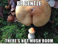 Memes, Mush, and Room: E GENTLE  THERE'S NOT MUSH ROOM Memes memes memes