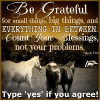 <3 The Horse Mafia: e grateful  for small things, big things, and  EVERYTHING IN BETWEEN  ount Soul Iessings,  not your problems  Mandy Hale  Type yes if you agree! <3 The Horse Mafia