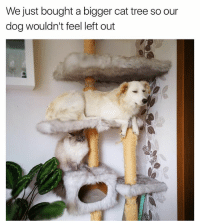 Funny, Tree, and Dog: e just bought a bigger cat tree so our  dog wouldn't feel left out Damn looks comfy up there, dibs on the top bunk