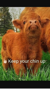 chins: e Keep your chin up