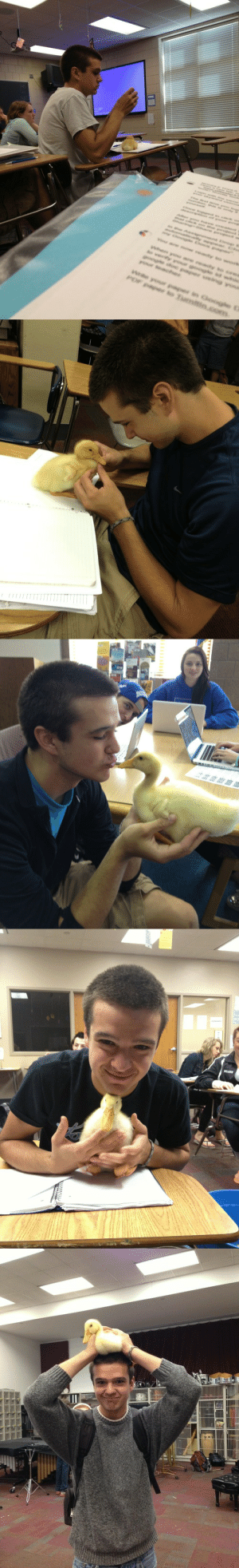subterraneanbunnypig:  devissitrhw:  Compiled all of the boy and his duck pictures with their original sourcing in what I hope is chronological order.   teenytigress         SO THIS GUY IN MY ENGLISH IS DOING A PROJECT FOR BIO WHERE HE GETS A DUCKLING TO IMPRINT ON HIM SO HE JUST CARRIES IT AROUND WITH HIM TO ALL OF HIS CLASSES AND I SWEAR THIS DUCK IS THE MOST WELL BEHAVED FUCKING POULTRY IVE EVER SEEN IT JUST SITS ON HIS DESK QUIETLY AND SOMETIMES HE PUTS IT IN HIS POCKET AND IT JUST SLEEPS LIKE WOW YOU GO DUCKY    teenytigress    THERE HE IS, WHAT A GEM AND LOOK AT THAT FUCKING DUCKLING AH I CAN'T    teenytigress    DUCK UPDATE: IT HAS IMPRINTED AND THINKS THIS BOY IS IT'S MOMMY. OMG    teenytigress    DUCK UPDATE: TODAY WE HAD A FIRE DRILL AND HE CARRIED THE DUCKY OUTSIDE WITH HIM AND CRADLED IT PROTECTIVELY AND MOTHERLY INSTINCTS ARE FUCKING ADORABLE    did-venusblowyour-mind    I know the duck boy and he and his duck are inseparable. An indestructible bond to say the least.        Actual Kids Story: A Boy and His Duck : e reacy  ng you  We your paper in Googte D  POF paper to Turnitin.com   pa subterraneanbunnypig:  devissitrhw:  Compiled all of the boy and his duck pictures with their original sourcing in what I hope is chronological order.   teenytigress         SO THIS GUY IN MY ENGLISH IS DOING A PROJECT FOR BIO WHERE HE GETS A DUCKLING TO IMPRINT ON HIM SO HE JUST CARRIES IT AROUND WITH HIM TO ALL OF HIS CLASSES AND I SWEAR THIS DUCK IS THE MOST WELL BEHAVED FUCKING POULTRY IVE EVER SEEN IT JUST SITS ON HIS DESK QUIETLY AND SOMETIMES HE PUTS IT IN HIS POCKET AND IT JUST SLEEPS LIKE WOW YOU GO DUCKY    teenytigress    THERE HE IS, WHAT A GEM AND LOOK AT THAT FUCKING DUCKLING AH I CAN'T    teenytigress    DUCK UPDATE: IT HAS IMPRINTED AND THINKS THIS BOY IS IT'S MOMMY. OMG    teenytigress    DUCK UPDATE: TODAY WE HAD A FIRE DRILL AND HE CARRIED THE DUCKY OUTSIDE WITH HIM AND CRADLED IT PROTECTIVELY AND MOTHERLY INSTINCTS ARE FUCKING ADORABLE    did-venusblo