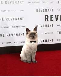 Red carpet ❤️ From @le0dicatrio: E REVENANT THE REVENANT THE REVENANT TH  REVENANT THE REVENANT  REVENANT THE  REV  HE REVENANT  REVENANT THE F  THE REVENANT TH  EVENANT THE  E REVENANT THE REVENANT  HE REVENANT  1E REVENANT THE REVENANT Red carpet ❤️ From @le0dicatrio