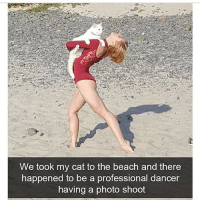 Memes, Beach, and Butterfly: e took my cat to the beach and there  happened to be a professional dancer  having a photo shoot Follow my other account @x__social_butterfly__x @x__social_butterfly__x @x__social_butterfly__x
