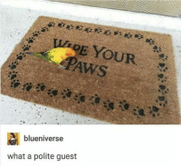 Indeed, What, and What A: E YOUR  blueniverse  what a polite guest very polite indeed