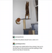 Memes, Date, and Image: E3zoeseyebrows  i feel like this photo should have a date on it  spatialapprentice  this image was made before time existed, that cat is  the first soul in the universe and the spilling of that  bowl is the folly of mortal sin. Plot twist: the picture is upside down - Max textpost textposts