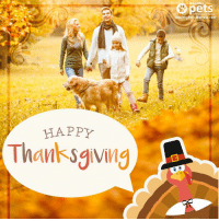 This is a special day to count our blessings and all the things that we are grateful for. Happy Thanksgiving everyone! 🦃 🥧 😊: ealthyPets.Mercola.com  HAPP  Thanksgiving This is a special day to count our blessings and all the things that we are grateful for. Happy Thanksgiving everyone! 🦃 🥧 😊