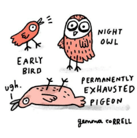 me irl: EARLY  BIRD  o SS  OO  NIGHT  OWL  PERMANENTLY  EXHAUSTED  PIGEON  gamma CoRRELL me irl