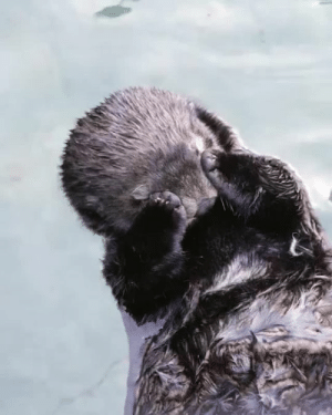 Instagram, Target, and Tumblr: earthstory:  vanaquaWe don't know who needs to see this, but stop what you're doing and watch this sleepy otter.