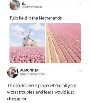 Netherlands, Almond, and All: @earthvisuals  Tulip field in the Netherlands  ALMOND  @ahmedtwinkiee  This looks like a place where all your  worst troubles and fears would just  disappear