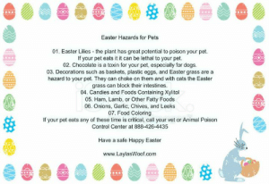 Cats, Dogs, and Easter: Easter Hazards for Pets  01. Easter Lilies the plant has great potential to poison your pet.  If your pet eats it it can be lethal to your pet.  02. Chocolate is a toxin for your pet, especially for dogs  03. Decorations such as baskets, plastic eggs, and Easter grass are a  hazard to your pet. They can choke on them and with cats the Easter  grass can block their intestines  04. Candies and Foods Containing Xylitol  05. Ham, Lamb, or Other Fatty Foods  06. Onions, Garlic, Chives, and Leeks  07. Food Coloring  If your pet eats any of these time is critical, call your vet or Animal Poison  Control Center at 888-426-4435  Have a safe Happy Easter  www.LaylasWoof.com Remember - keep your pets safe