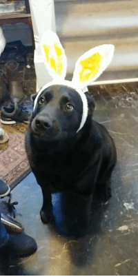 Easter, Dog, and Pupper: Easter Pupper