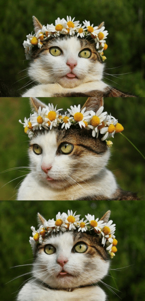 eat-black-paper:  animals-addiction: The spring queen   Midsommar (2019): eat-black-paper:  animals-addiction: The spring queen   Midsommar (2019)