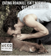 Weed is dangerous: EATING ROADKILL ISN'T NORMAL  BUT ON WEED IT S  WEED  NOT EVEN ONCE  .com/MMYVofficia Weed is dangerous