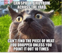 Memes, Birds, and 🤖: EATLIVER.COM  CAN SPOTA BIRD FROM  ACROSS THE YARD  CAN'T FIND THE PIECE OF MEAT  VOUDROPPED UNLESS YOU  POINTITOUT10 TIMES