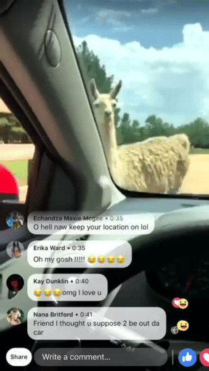 Lol, Love, and Omg: Echandza Maxie Mcgee 0:35  O hell naw keep your location on lol  Erika Ward 0:35  Kay Dunklin 0:40  uu 부 omg i love u  Nana Britford 0:41  Friend I thought u suppose 2 be out da  car  Share  Write a comment... Feeding the alpacas