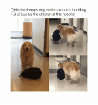 Children, Memes, and Hospital: Eddie the therapy dog carries around a bookbag  Full of toys for the children at this hospital This is just adorable 🙈🐶 Comment the name of your pet below and see if anyone shares it with you 💕
