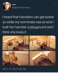 Bored, Life, and Roommate: @edenirishoney  I heard that hamsters can get bored  so while my roommate was at work l  built her hamster a playground and l  think she loves it  2017-11-28, 6:36 PM <p>This hamster that's loving life:</p>