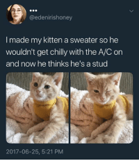 Kitten, Now, and Made: @edenirishoney  I made my kitten a sweater so he  wouldn't get chilly with the A/C on  and now he thinks he's a stud  2017-06-25, 5:21 PM