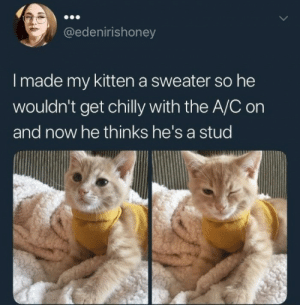 Confidence, Dank, and Memes: @edenirishoney  I made my kitten a sweater so he  wouldn't get chilly with the A/C on  and now he thinks he's a stud Confidence Cat by fightmilk22 MORE MEMES