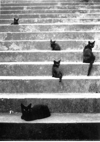 edoardojazzy:  Afternoon in Porto 2005  @Panna Ola  FIVE pussys? On my newly reformed conservative tumblr? @staff DELETE: edoardojazzy:  Afternoon in Porto 2005  @Panna Ola  FIVE pussys? On my newly reformed conservative tumblr? @staff DELETE