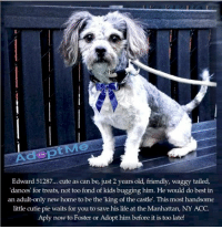 Andrew Bogut, Animals, and Children: Edward 51287.. cute as can be, just 2 years old, friendly, waggy tailed,  'dances' for treats, not too fond of kids bugging him. He would do best in  an adult-only new home to be the 'king of the castle. This most handsome  little cutie pie waits for you to save his life at the Manhattan, NY ACC.  Aply now to Foster or Adopt him before it is too late! **FOSTER or ADOPTER NEEDED ASAP** Edward 51287... cute as can be, just 2 years old, friendly, waggy tailed, 'dances' for treats, not too fond of kids bugging him. He would do best in an adult-only new home to be the 'king of the castle'. This most handsome little cutie pie waits for you to save his life at the Manhattan, NY ACC. Aply now to Foster or Adopt him before it is too late!  ✔Pledge✔Tag✔Share✔FOSTER✔ADOPT✔Save a life!  ************************************** To FOSTER or ADOPT adorable little Edward, SPEAK UP NOW & Save a Life, APPLY with rescues OR message Must Love Dogs - Saving NYC Dogs IMMEDIATELY!!!! **************************************  The general rule is to foster you have to be within 4 hours of the NYC ACC approved New Hope partner rescues you are applying with and to adopt you will have to be in the general NE US area; NY, NJ, CT, PA, DC, MD, DE, NH, RI, MA, VT & ME (some rescues will transport to VA).  ************************************** You must apply to rescues already approved to pull from NYC ACC shelters. Rescues can't do anything without APPLICATIONS! If your application is approved, rescue will arrange transport. **************************************  Edward 51287 Small Mixed Breed Sex male Age 2 yrs (approx.) - 16 lbs My health has been checked.  My vaccinations are up to date. My worming is up to date.  I have been micro-chipped.  I am waiting for you at the Manhattan, NY ACC. Please, Please, Please, save me!  Basic Information: Edward is a Small mixed breed dog that came in as a stray.   How is this dog around strangers? Edward is very friendly ar