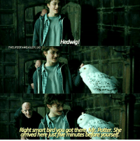 - Date: 12-07-17 --- Fun fact: the actual dialogue in the movie calls Hedwig a 'he' --- I want a Hedwig. Out of everyone she really really shouldn't have died. ---- Q- would you rather be a muggle or a squib? --- HarryPotter ThePrisonerOfAzkaban: edwig!  THELIFEOFAWEASLEYIIG  Right smart birdyou got th  ere just ive minutes bejore yoursel - Date: 12-07-17 --- Fun fact: the actual dialogue in the movie calls Hedwig a 'he' --- I want a Hedwig. Out of everyone she really really shouldn't have died. ---- Q- would you rather be a muggle or a squib? --- HarryPotter ThePrisonerOfAzkaban