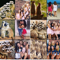 Further proof that girls pose exactly like meerkats in pictures. Follow @9gag @9gagmobile 9gag meerkats: EEN  BIG Further proof that girls pose exactly like meerkats in pictures. Follow @9gag @9gagmobile 9gag meerkats