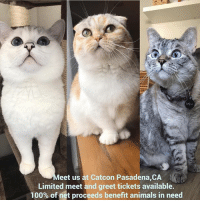Meet us at Catcon Pasadena,CA. August 12-13. 10:30am - 12:30pm. LIMITED meet and greet tickets available. 100% of net proceeds benefit animals in need. bit.ly-NalacatCatcon: eet us at Catcon Pasadena,CA  Limited meet and greet tickets available.  100% of net proceeds benefit animals in need Meet us at Catcon Pasadena,CA. August 12-13. 10:30am - 12:30pm. LIMITED meet and greet tickets available. 100% of net proceeds benefit animals in need. bit.ly-NalacatCatcon