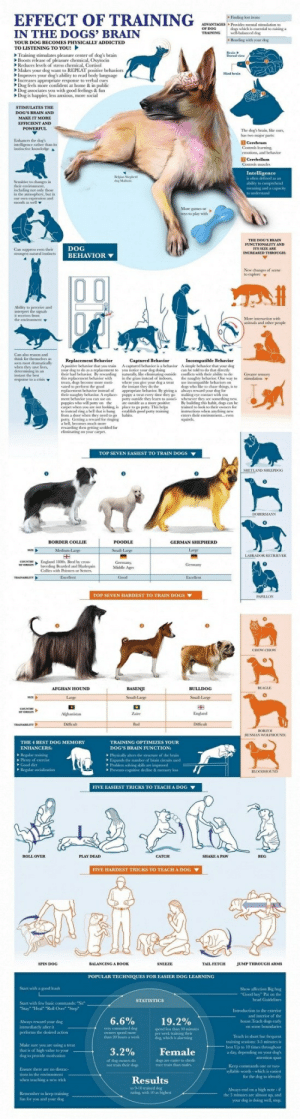 Actional: EFFECT OF TRAINING  IN THE DOGS' BRAIN  Hnding lost items  dogs which is esential to raising a  Bonding with your dog  iti  ADVANTAGES Prosides mental stimulation to  YOUR DOG BECOMES PHYSICALLY ADDICTED  TO LISTENING TO YOU!  Training stimulates pleasure center of dog's brain  Boosts release of pleasure chemical, Oxwxín  Reduces levels ol stress chemical, Cortisol  Makes your dog want to REPEAT  Improves your  Increases  Dog feels more confident at home& in public  Dog associates you with good feelings & fun  Dog is happier, less anxious, more social  to read  appropriate response to verbal cues  MAKE IT MORIE  The dog's brain, like ours  has two majorts  Enhances the dog's  intelligence rather than its  Contrels learning  emotions, and behavior  Intelli  Semátive to changrs in  inclucing not only those  our own oprmon and  Moregancs or  toys to play with  n suppress even their  strongest matural insincts  DOG  BEHAVIOR  New changes of scene  eives from  More inneraction with  animals and other people  Cam also reason and  A psitive behavioer that you train A captured behunior is a behunior A imple behunior that your dog  your dog to do as a replacemment to you otice your dog doing  their bad behaior By rewarding naturlly, like eliminating outside conflicts with their ability to do  this replacement behavior with in the grass instead of indoors, the naughey behavNK (he way to  treats, dog become more moti- where you give your dog a treat  can be told to do that directly  Greater sensory  simulation ▼  to perform the good  the inssant they do the  dop wło ії  so chase things, İ.o  replacement bchavior instead of appropriate behavice By  their nanghtybhae A replace ppey a tem every tine they go making eye contact with you  ment behavior you can use on oty outside they learn to associ- whenever they see something new  puppies who will pony on theate outside as a more positive B  carpet when you are mot looking, is place to go potty This help  to inwead ring 