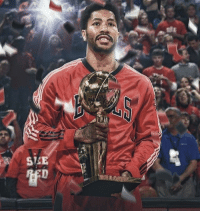 Fall, Memes, and Nba: eft  SEE Will D Rose end up in the HOF or will he become the first MVP in NBA history to fall short? (@enriqueproduction) HOOPSNATION