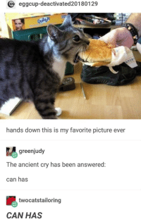Ancient, Been, and Can: eggcup-deactivated20180129  hands down this is my favorite picture ever  greenjudy  The ancient cry has been answered:  can has  twocatstailoring  CAN HAS For nearly twelve years we pondered