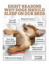 Dogs, Fall, and Memes: EIGHT REASONS  WHY DOGS SHOULD  SLEEP ON OUR BEDS  Keep you warm  You will  feel safer  Relieve  stress  Your dog  enjoys being  close to you  Reduces  depression  Helps you fall  asleep faster  shakepaws.com  Helps you live longer  Free hugs  available!