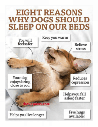 Memes, Depression, and 🤖: EIGHT REASONS  WHY DOGS SHOULD  SLEEP ON OUR BEDS  Keep you warm  You will  feel safer  Relieve  stress  Your dog  Reduces  enjoys being  depression  close to you  Helps you fall  asleep faster  Shake paws com  Free hugs  Helps you live longer  available! Does your dog sleep on your bed?