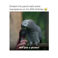 See anyone's snapchats from my link in my bio 👻: Einstein the parrot nails some  impressions on his 30th birthday  Zoo Knoxville  Are you a pirate? See anyone's snapchats from my link in my bio 👻
