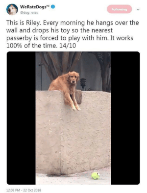 Time, Dog, and Him: eKateDogS  Following  @dog rates  This is Riley. Every morning he hangs over the  wall and drops his toy so the nearest  passerby is forced to play with him. It works  100% of the time. 14/10  12:08 PM-22 Oct 2018 Id play with Riley