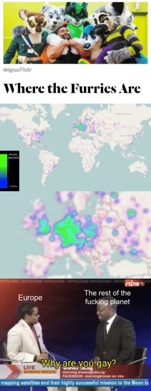 Seriously what the fuck is up with that Europe?: ekigyuu/Flickr  Where the Furries Are  Densely  populated  Mralla  -1 furry  abss  The rest of the  Europe  fucking planet  Why are you gay?  LIVE  MORNING BREEZE  morning breezenbs.ug  FACEBOOK: morningbreeze on nbs  mapping satellites end their highly successful mission to the Moon by Seriously what the fuck is up with that Europe?