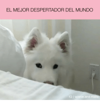 Mundo, And, and Winnie: EL MEJOR DESPERTADOR DEL MUNDO  IG I winnie.and.malla @winnie.and.malla cabroworld