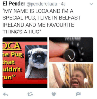 "Dank, Ireland, and Live: El Pender @penderellaaa 4s  ""MY NAME IS LOCA AND I'M A  SPECIAL PUG, I LIVE IN BELFAST  IRELAND AND ME FAVOURITE  THING'S A HUG""  hat  uldn't  LI  un  1R"