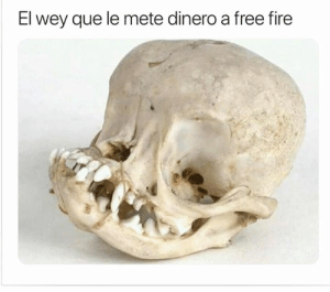 Fire, Memes, and Free: El wey que le mete dinero a free fire