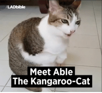 Dank, 🤖, and Kangaroo: ELADbible  Meet Able  The Kangaroo-Cat His front legs were fried off. What a remarkable recovery! 🐱❤️