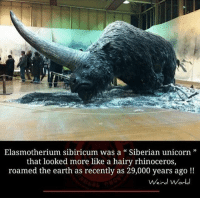 """Are these the origin of the unicorn myth? SiberianUnicorn 🤔 Check out my Friends... 📢 @raisingconsciousness @naturalworldorder @terraplanetruth @dome_finder_ For our Plane(t) 🌎 ✊🏽 siberia unicorns unicorn myth beast creature wow mindblowing russia russian asian science history prehistoric iceage flatearth chemtrails government conspiracy sheeple anonymous interesting awakening consciousness fakenews instagram animals nature: Elasmotherium sibiricum was a """" Siberian unicorn""""  that looked more like a hairy rhinoceros,  roamed the earth as recently as 29,000 years ago!!  ein Are these the origin of the unicorn myth? SiberianUnicorn 🤔 Check out my Friends... 📢 @raisingconsciousness @naturalworldorder @terraplanetruth @dome_finder_ For our Plane(t) 🌎 ✊🏽 siberia unicorns unicorn myth beast creature wow mindblowing russia russian asian science history prehistoric iceage flatearth chemtrails government conspiracy sheeple anonymous interesting awakening consciousness fakenews instagram animals nature"""