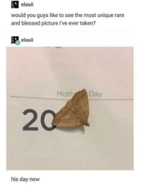Blessed, Taken, and Rare: elauii  would you guys like to see the most unique rare  and blessed picture i've ever taken?  elauii  Moth Day  20  his day novw His special day via /r/wholesomememes https://ift.tt/2zOTZPr