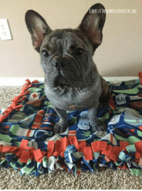 Comfortable, Definitely, and Family: ELBERT FRENC  ORG  CHBULLDOGRESCUE Please give a warm and welcome hello to our latest itchy lad, Elbert! Elbert was surrendered when his family ran out of resources trying to battle his allergies. With the help of you, our generous supporters, his wishlist of needed items sold out a few weeks ago and he is already feeling so much better. He is a happy, resilient little guy, who is already quickly adjusting to his foster home.  Elbert's allergies are definitely going to a take a lot of time and effort to get under control. He has lost most of his hair, smells like yeast, and is a mass of raw skin and scabs. He will be having full allergy testing done, but in the interim, he's been transitioned over to a combination of raw food, Apoquel, Zyrtec, and lots of medicated shampoo baths.  Elbert is learning some manners in his foster home and has an A+ attitude, so we have no doubt once his poor, itchy skin is feeling more comfortable, he'll quickly find a forever family. In the meantime, Elbert could dearly use some help with his medical expenses and overall motivation to kick the itch for good! Please head on over to his page if you would like to sponsor him. http://frenchbulldogrescue.org/help-fbrn/foster-dogs/