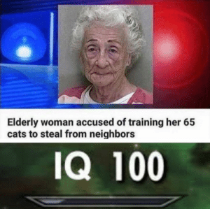 Anaconda, Cats, and Crazy: Elderly woman accused of training her 65  cats to steal from neighbors  IQ 100 Crazy cat burglar