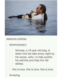 Clothes, Fall, and Love: eleanors-clothes:  silvernoctuary:  Schoep, a 19 year old dog, is  taken into the lake every night by  his owner, John, to help soothe  his arthritis and help him fall  asleep.  this is love. this is love. this is love.  Amazing awesomacious:  Setting the new standard for dog owners