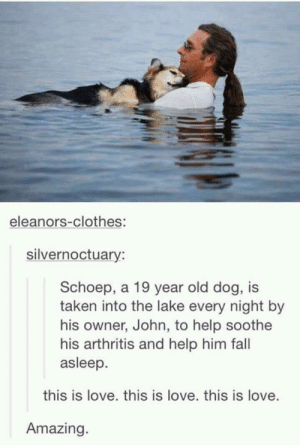 Clothes, Fall, and Love: eleanors-clothes:  silvernoctuary:  Schoep, a 19 year old dog, is  taken into the lake every night by  his owner, John, to help soothe  his arthritis and help him fall  asleep.  this is love. this is love. this is love.  Amazing. This is true love.