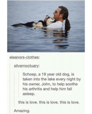 Clothes, Fall, and Love: eleanors-clothes:  silvernoctuary:  Schoep, a 19 year old dog, is  taken into the lake every night by  his owner, John, to help soothe  his arthritis and help him fall  asleep.  this is love. this is love. this is love.  Amazing. Good boi and wholesome owner.