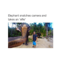 24k: Elephant snatches camera and  takes an 'elfie' 24k